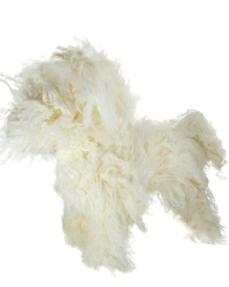 MODEL DOG BICHON FRISE FULL BODY REPLACEMENT COAT
